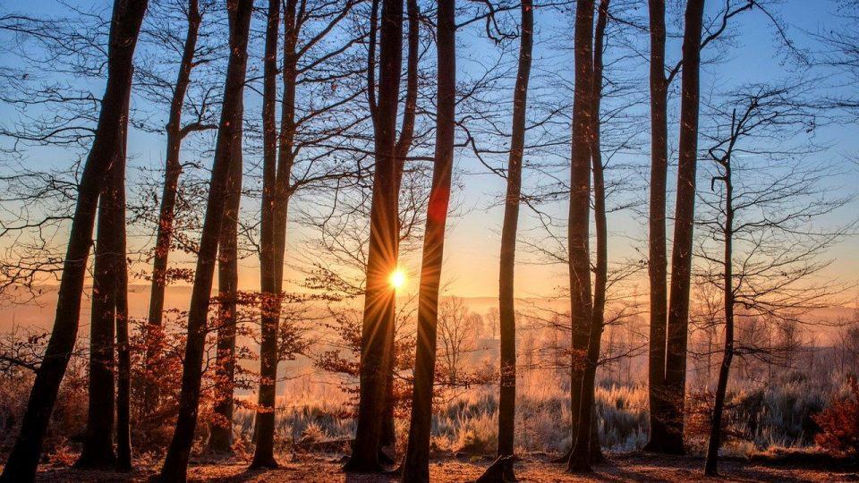 ratowanie drzew