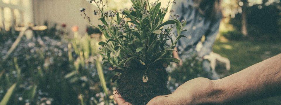 rosliny domowe